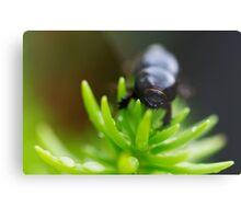 BeetleJuice Metal Print