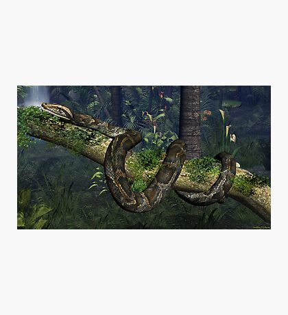Reticulated Python Photographic Print