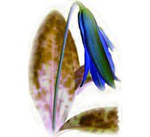 Wild flower III.... Photographic Print