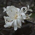Full bloom !  by Jeff Stroud