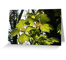 Young Sycamore Leaves Greeting Card