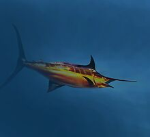 Sword Fish © by jansnow