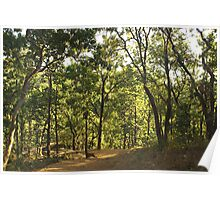 A path through a sparse forest and trees Poster