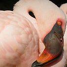 red eye flight by Mark Cosgriff