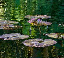 Tranquility Pond by Tomas Abreu