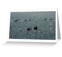 Mudeford Swans Greeting Card