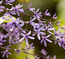 Purple Spray by Donna Adamski