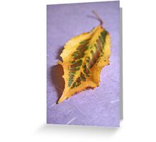 Dappled beauty Greeting Card