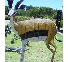 THE AFRICAN SPRINGBOK Photographic Print