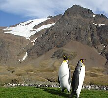 King Penguins by hannibalannie