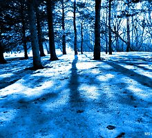 Blue Forest Natural Light and Shadow by M Sylvia Chaume