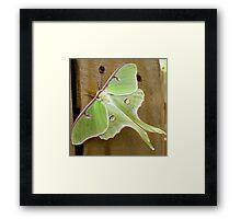 The Luna Moth Framed Print