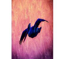 Dusky Dawn Pelican Brief Photographic Print