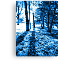 Blue Forest 2 Natural Light and Shadow Canvas Print