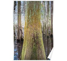 Colors of the Swamp Tupelo – Congaree National Park, South Carolina Poster