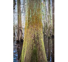 Colors of the Swamp Tupelo – Congaree National Park, South Carolina Photographic Print