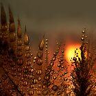 Feather Dew at Dawn by Gazart