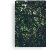Green  forest nature Canvas Print