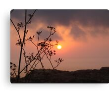Sunset behind the fennel plant Canvas Print