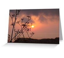 Sunset behind the fennel plant Greeting Card