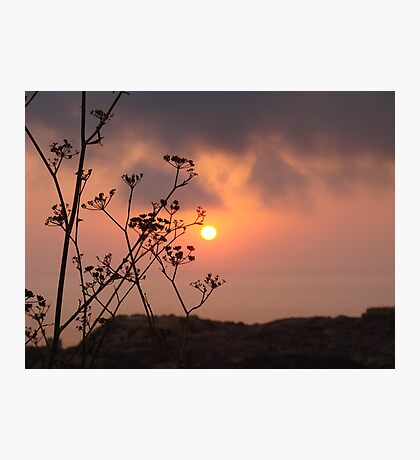 Sunset behind the fennel plant Photographic Print