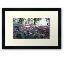 Pink Pedals Framed Print