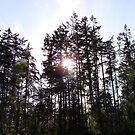 Nature's Skyline by JeanMCarlos