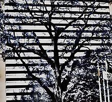 Stripes by Michael McCasland