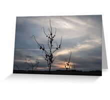 Plant Silhouette At Sunset Greeting Card