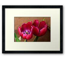 Pink Tulip Pair Framed Print