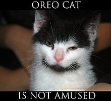 Oreo Cat by reneh