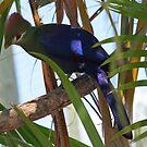 Rainforest Bird by Virginia N. Fred