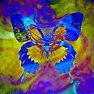 Metamorphosis  by Scott Mitchell
