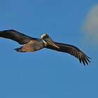Soaring by pictureit