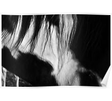 Texture of Horse Poster