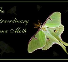 Luna Moth by Lisa  Weber