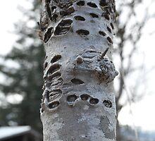 Woodpecker's tree by TheKoopaBros