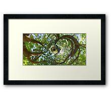 In Treetops Framed Print