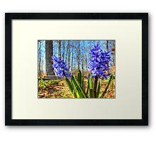 Spring Hyacinths Framed Print