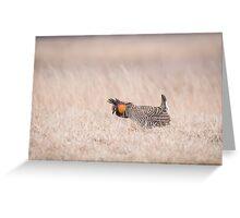 Prairie Chicken 1-2015 Greeting Card