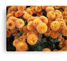 So Bright And Cheery Canvas Print