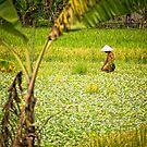 Watercress - Lombok, Indonesia by Stephen Permezel