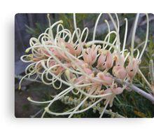 A spaghetti flower,   no a grevillia bush Canvas Print
