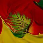 Rainbow Fish by Sam McCabe