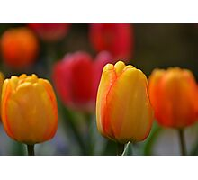 Spring in Colors Photographic Print