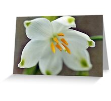 Galanthus nivalis 'Viridapice' Greeting Card