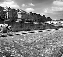 Quai des Orfevres Black and White Dog by Arnaud Lebret