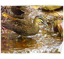Woodlands Duck Poster