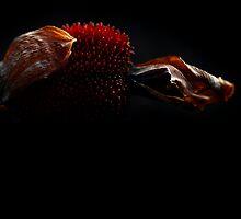 Canna Seed Pod by micklyn