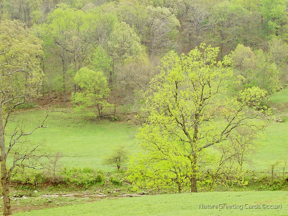 Pastel Spring In The Ozarks  by NatureGreeting Cards ©ccwri